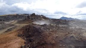 """Thermal """"outlier"""" in the subarctic – animals of geothermally active lava fields (Termalny """"outlier"""" w subarktyce – zwierzęta z aktywnych geotermalnie póllawowych)"""